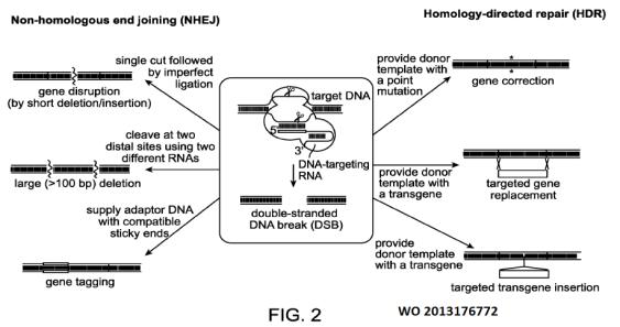 WO2013176772-Fig. 2